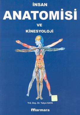 İnsan Anatomisi ve Kinesyoloji