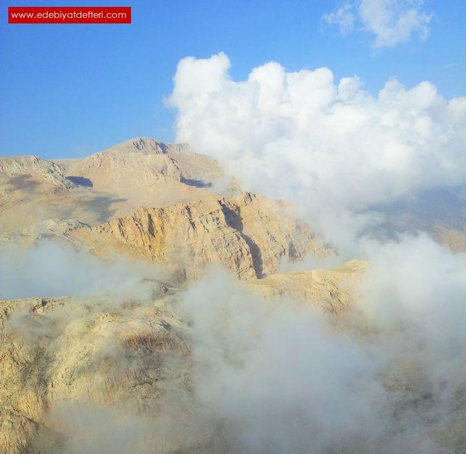 Dağ Gülü