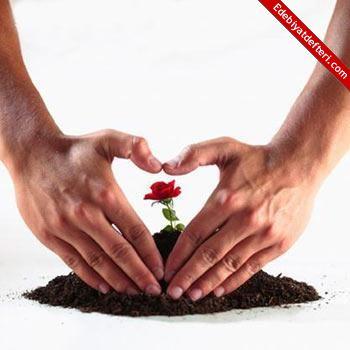 Sevgi gelince bir gelince…