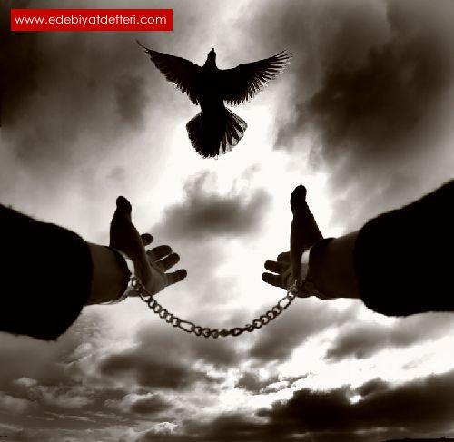 Özgürsün Artık