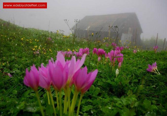 Vargit Çiçekleri