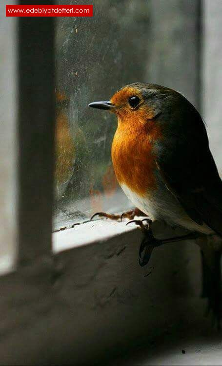 Günaydın Sevgilim şiiri Onur Altınok şairine Ait şiirler Onur