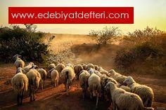 Ben Bir Garip Çobanım Dağlarda