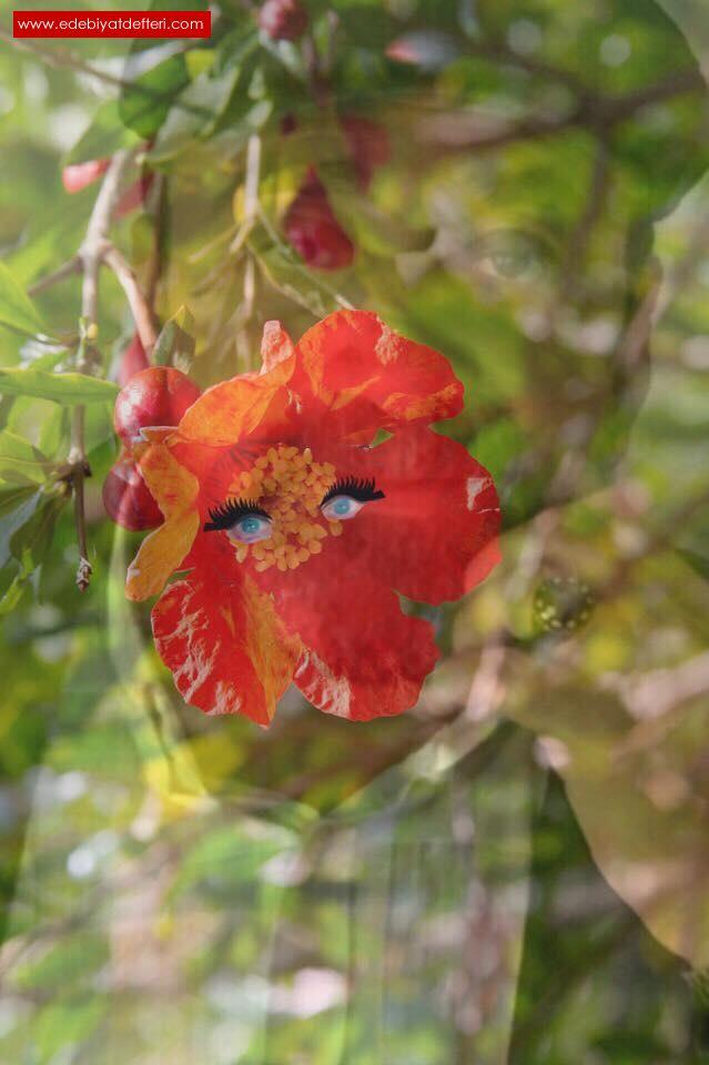 Mavi gözlü nar çiçeğim