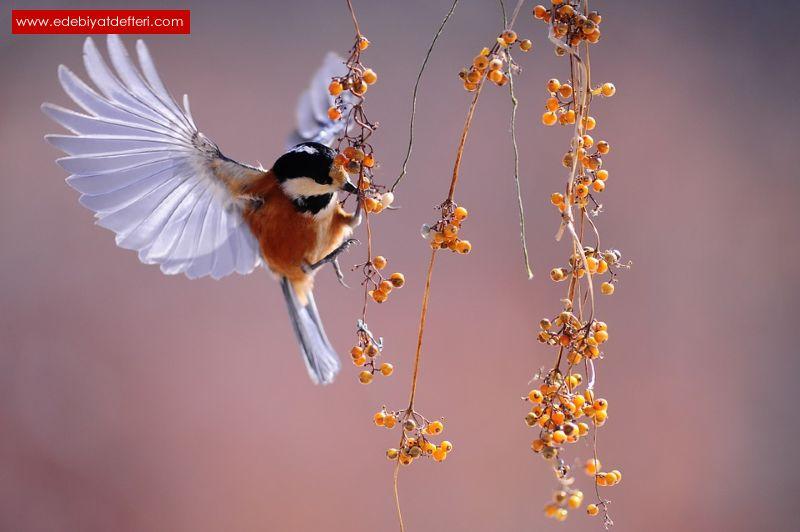 Pencereden Uçan Kuş...