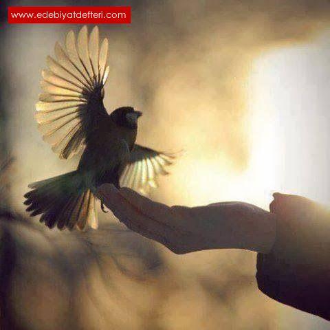 Mor Çalı Kuşu