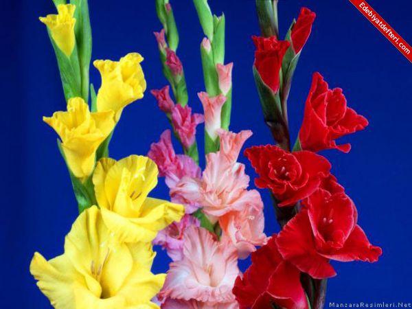 gönül çiçeği