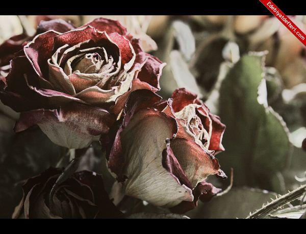 Zamansız Soldu Çiçekler