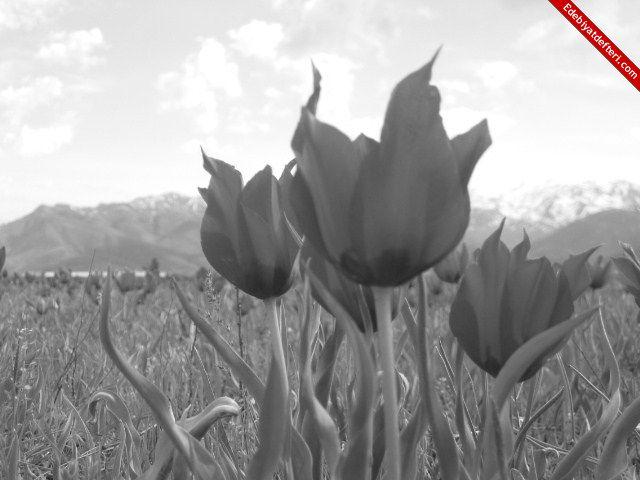 Tanrı'nın Çiçeği