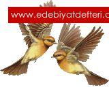 Barış Güvercinleri