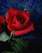 Anne yüreğinin onurlu bayramı...