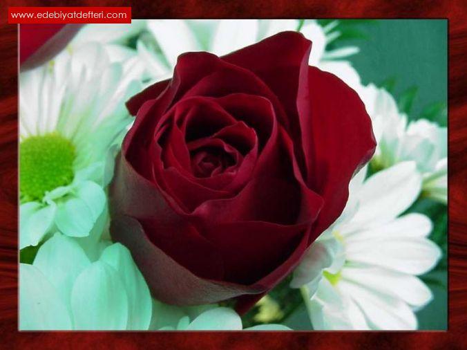 Güller Açardı