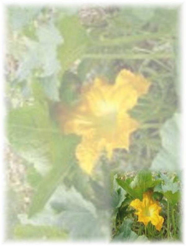 Çiçeklerin Ece'si