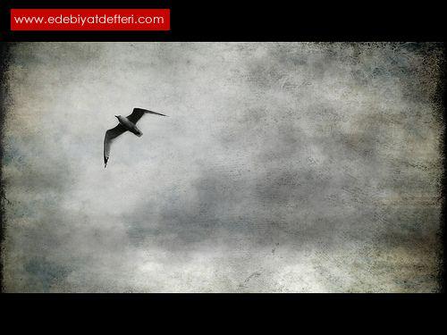 Muhâcir Kuşlar