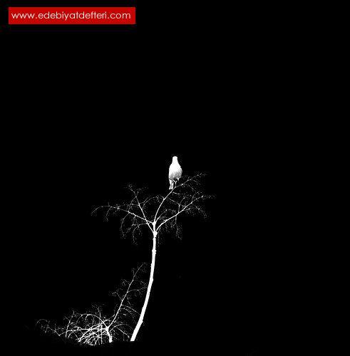 ecinli şiirler - IV -