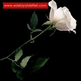Güllere Yüreğimi kattım