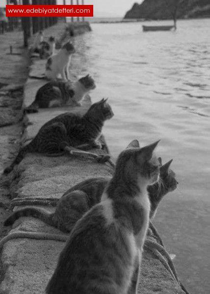 Belkide kediler eve hapsolmak istemiyordur.