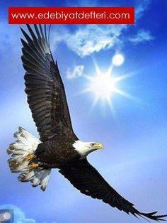 J.NIN NOT Defteri-3/ İnsan Uçar mı?