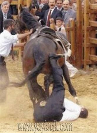 At Mübarek Bir Hayvandır! (Makale)
