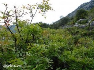 Çitlembik Vadisi- Gürleyik'te İlk Gün