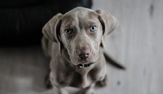 Köpeğin Adı Badi-56