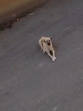 O Bir Sokak Köpeği İdi...