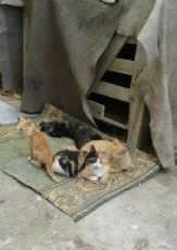Kedilerime Dair