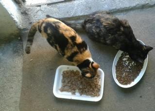 Kedi Dünyası
