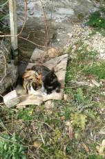 Kedi Kaç Yıl Yaşar?