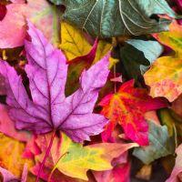 Renklerim.... (1)
