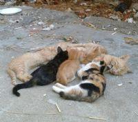 Kedilerimle Günlerim
