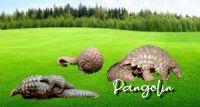 Pangolin'inizi Yağda Kızartma mı istersiniz Çöp Şiş mi..?