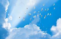 DEVLETİN YASAKLARI MI ALLAH'IN HARAMLARI MI?